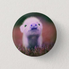 Funny Pig Button at Zazzle
