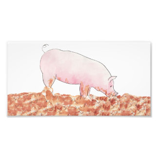 Funny pig in mud novelty art photo print