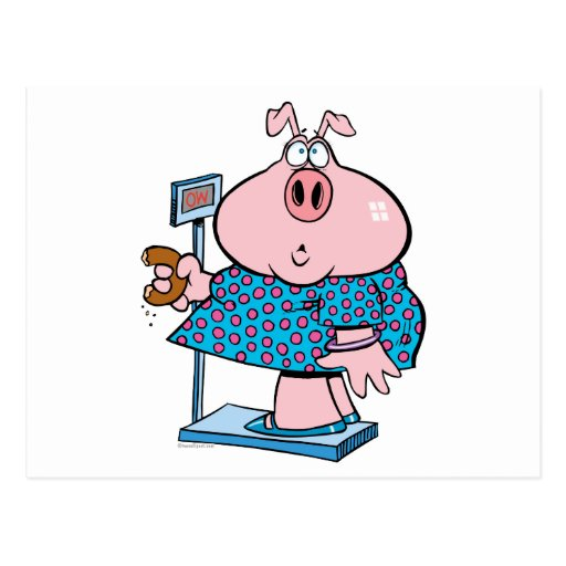 funny pig on a diet eating a donut on a scale postcard