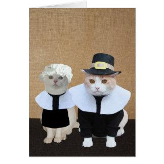 Funny Pilgrim Cats Thanksgiving Card
