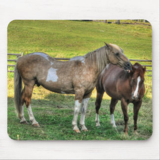 Funny Pinto Stallion & Sorrel Mare Horse Friends 3 Mouse Pad