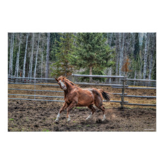 Funny, Playful Chestnut Ranch Horse Equine Photo Poster