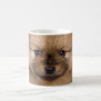 funny pomeranian spitz coffee mug