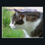 "Funny Postcard: Cat Watching Donald Trump&#39;s Hair Postcard<br><div class=""desc"">What&#39;s that on his head?</div>"