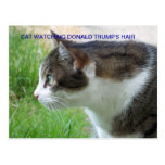 Funny Postcard: Cat Watching Donald Trump's Hair Postcard