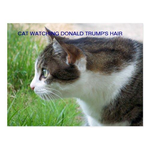 Funny Postcard Cat Watching Donald Trumps Hair Postcard