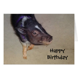 Funny Pot Bellied Pig Photography Greeting Card