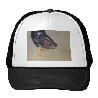 Funny Pot Bellied Pig Photography Trucker Hat