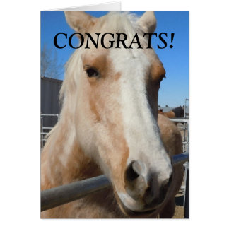 Funny Professional Graduate Congratulations Horse Greeting Cards