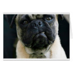 Funny Pug Cards
