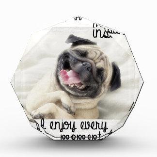funny pug insanity award