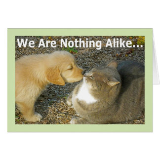 Funny Puppy, Kitty Love Romance Greeting Card