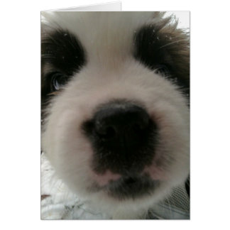 Funny Puppy Nose Cards