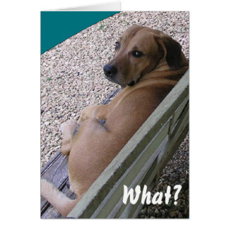 Funny Quote Dog Picture Card