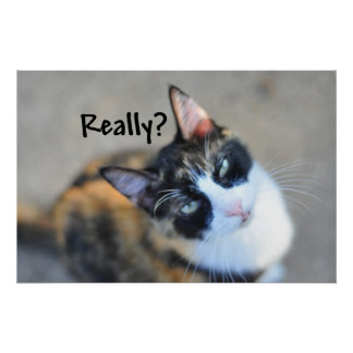 """Funny """"Really"""" Cute Calico Cat Poster"""