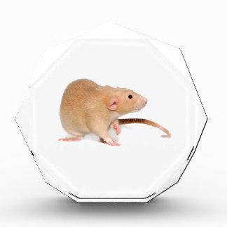 Funny red rat. acrylic award