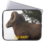 Funny Rocky Mountain Wild Big Horn Sheep Computer Sleeves