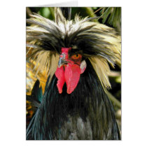 Funny Rooster Chicken Photo Birthday Card