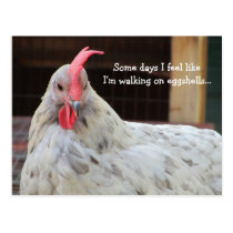 Funny Rooster with Saying Postcard