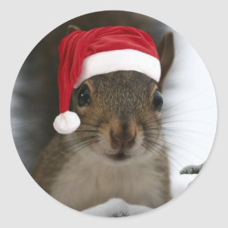 Funny Santa Squirrel Wearing Santa Hat Classic Round Sticker