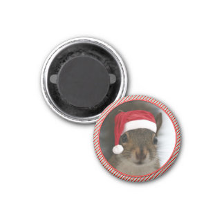 Funny Santa Squirrel Wearing Santa Hat Magnet