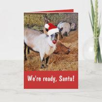 Funny Santa's Goats Christmas Card