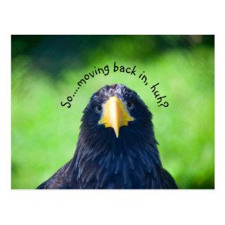Funny Sea-hawk Bird•Custom Postcard
