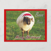 Funny Sheep Christmas Postcard