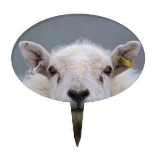 Funny Sheep Picture Cake Topper