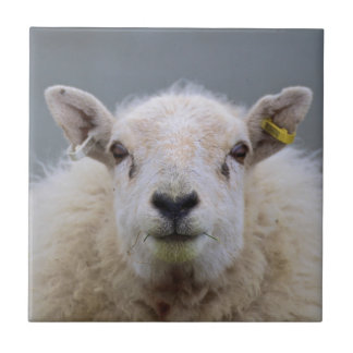Funny Sheep Picture Ceramic Tiles