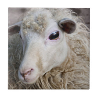 Funny Sheep Tiles