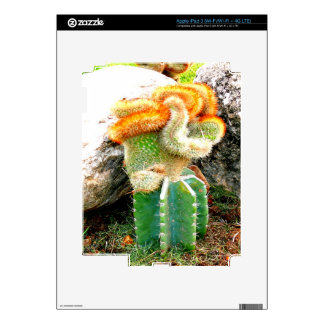 funny shy monkey cactus decal for iPad 3