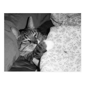 Funny Sleeping Cat in Bed Postcard