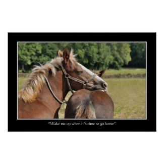 Funny sleeping foal poster