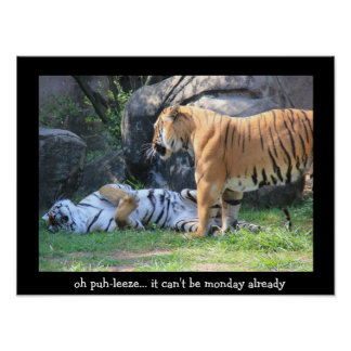 Funny Sleeping Tiger (16x12), monday already? Poster
