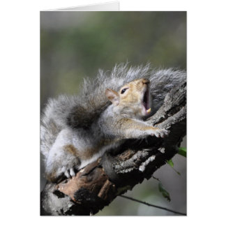 Funny Sleepy Squirrel Blank Card