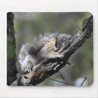 Funny Sleepy Squirrel Blank Card Mouse Pad