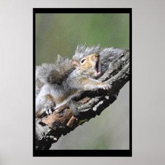 Funny Sleepy Squirrel Blank Card Poster