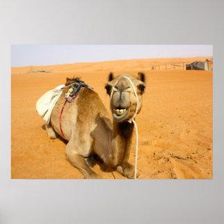 Funny Smiling Camel Poster