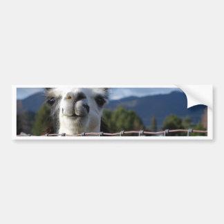 Funny Smiling Llama in Southern Oregon Car Bumper Sticker