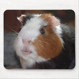 Funny, Smooth, Tricolor Guinea Pig Face Mouse Pad