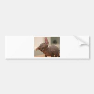 Funny sneezing sphynx kitten bumper sticker
