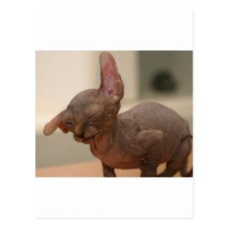 Funny sneezing sphynx kitten postcard