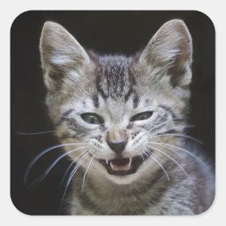 Funny Sneezing Tabby Kitten Square Sticker