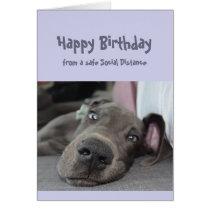 Funny Social Distancing Birthday Great Dane Dog