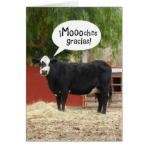 Funny Spanish Speaking Cow Thank You Card