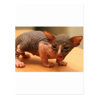 Funny sphynx kitten postcard