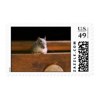 Funny Squirrel Hiding Stamp