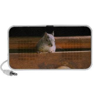 Funny Squirrel Hiding Mp3 Speaker