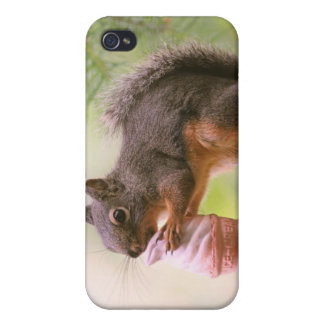 Funny Squirrel Licking Ice Cream Cone Cover For iPhone 4